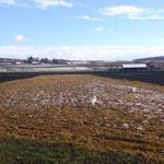 """Noch sind die meisten Felder abgeerntet oder brach, denoch üben wir jetzt schon den """"Garten"""" nicht zu betreten"""