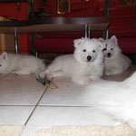 Lexi, Arctic (Bubi), Ariel (Pascha)