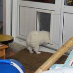 Die Hundeklappe können seit ein paar Tagen alle Welpen problemlos passieren, so können sie sich zurück ziehen.
