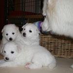 vorne Bubi orange, links  Hündin rouge, rechts bleu und Riga wollte auch noch auf's Foto