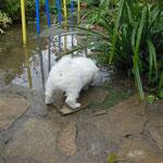 Seit wann gibt's denn hier ein Teich?