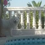 20.07.2014 Pascha's erster Urlaub in Spanien