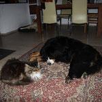 Charly und Calimero