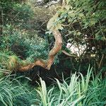 Dans le jardin d'un superbe B&B à Clifden (Connemara)