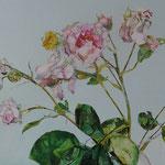 Rosenbild II, 100 x 100 cm, Acryl auf Leinen
