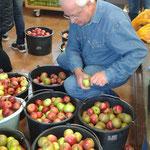 Paul entfernt die letzten Blätter von den Äpfeln.