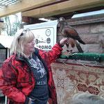 Frau Kölsch mit Harris Hawk Fly