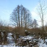Auch hier aufgeschichtetes Schnittholz im Vordergrund