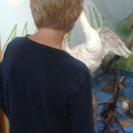 Jannik bewundert den ausgestopften Schwan