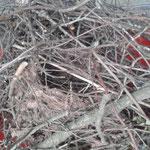 Ein in einem Baum gebautes Elster-Nest
