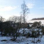 Überblick über unser Feuchtgebiet mit den Kopfweiden im Blümelstal