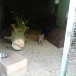 Ein Fuchsbaby traut sich aus dem Versteck
