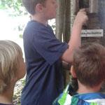 Die Kinder schauen sich die Nisthilfe genau an