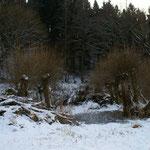 Links aufgeschichtetes Schnittholz. Lebens- und Nistraum