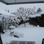 unser Garten am 31.12.2014. Drei Tage vor unserer Abreise