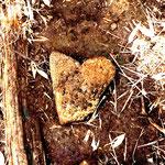三石山荘から山頂までの登山道にあった石。ハートの形にひかれて撮影しました(盛岡 木皿 義倫さん)