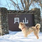 雪の残る宮古の月山(がっさん)に登り、看板の前で我が家の愛犬「花(メス)」がただずむ姿を撮りました(宮古 宮本 勝吉さん)