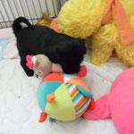 So, das Spielzeug gehört mir !!