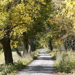 Wanderweg zum alten Forsthaus