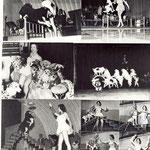 Той-фокстерьер, Участие в цирковых номерах