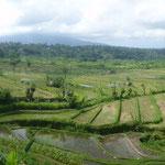 schöne Reisterrassen auf Bali
