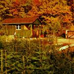 Die alte Baumschule