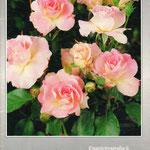Pflanzenkatalog Cover von 1994
