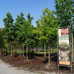 Gartenbäume