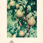 Pflanzenkatalog Cover von 1959