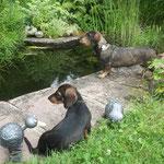 Bela an ihrem Teich mit einer Spielgefährtin