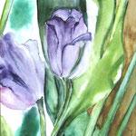 Lila Tulpen 35 x 24