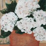 weiße Hortensie    40 x 30