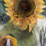 Sonnenblumen 31 x 24