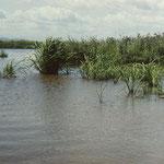 Fluss Lefu (Amur-Becken nahe des Sees Hanka)