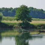 Wasservögel und verschiedene Tierarten lassen sich beobachten...