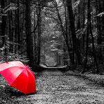 Der Wald und mein Schirm