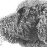 Choco the Standard Poodle