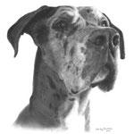 In liefdevolle herinnering aan Titan de Duitse Dog