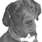 In liefdevolle herinnering aan Tyson de Duitse Dog
