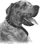 Nero the Great Dane