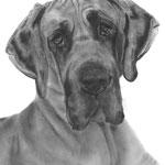 In liefdevolle herinnering aan Fayah de Duitse Dog