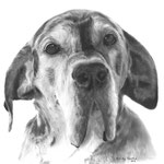 In liefdevolle herinnering aan Fonsje de Duitse Dog