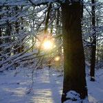 Winterabend im Wald