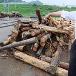 木材集積所