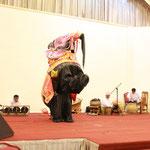 der Elefantentanz