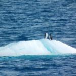 Pinguine am Eisberg