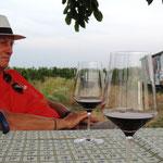 in Andert´s Weingärten in Pamhagen