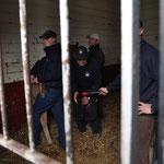 Abschließend noch:  Zur  Vermeidung von Verletzungen bei Fohlen und Personen empfiehlt sich diese Methode. Praktiziert an den wertvollsten Fohlen & 1000 fach bewährt und pa