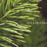 Postal Fotográfica by Martuka. Cola de Caballo - Asturias. 3€