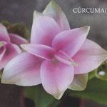 Postal Fotográfica by Martuka. Cúrcuma (flor) - Centelles Catalunya. 3€
